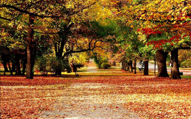 Autumn Leaves Park