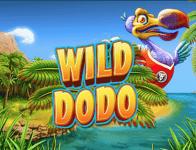 Wild Dodo Slots Intro